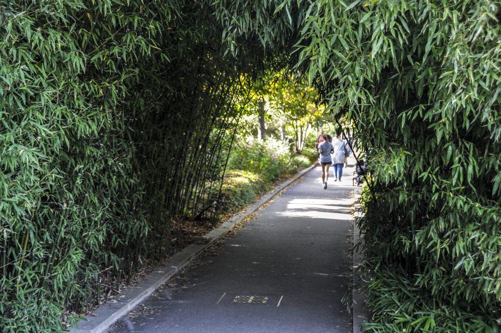 Tunnel de bambous sur la coulée verte