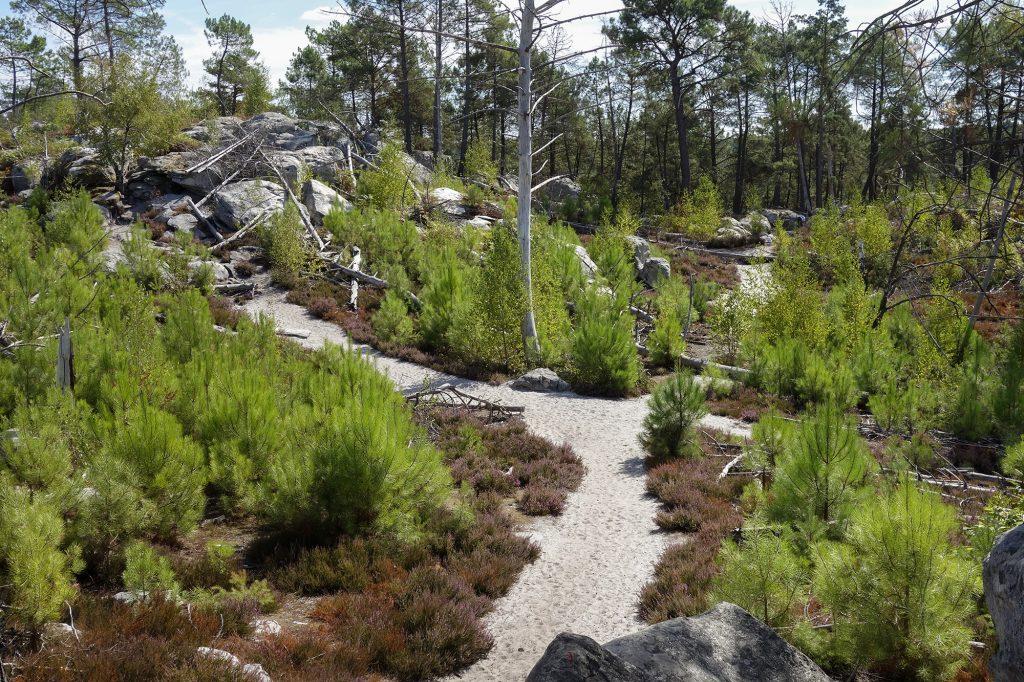 Le sable blanc de la forêt de Fontainebleau
