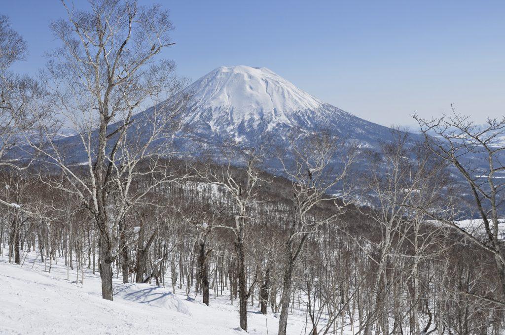 Les forêts de Niseko