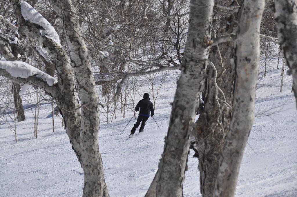 La joie du ski dans les arbres