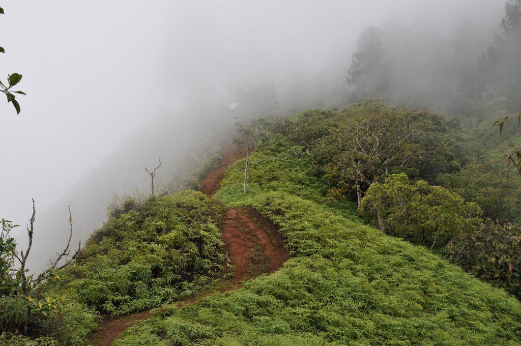 Vers le mont Aorai à Tahiti